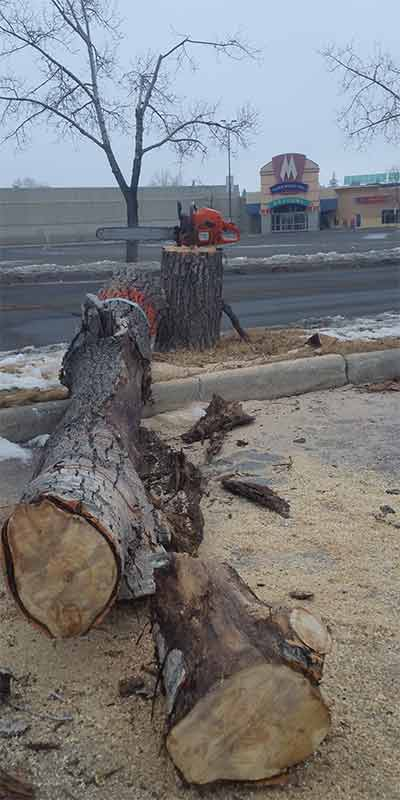 Marlborough Mall - Prairie Woodlands Tree Care LTD.