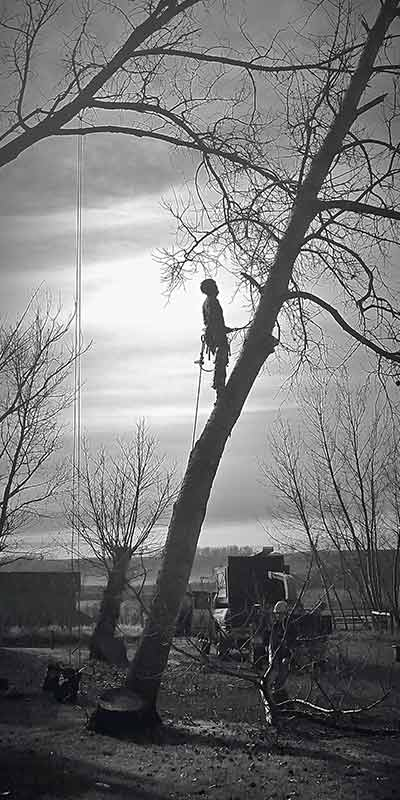 Poplar Climb - Prairie Woodlands Tree Care LTD.
