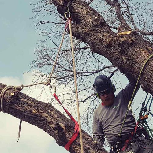 Rigging - Prairie Woodlands Tree Care LTD.