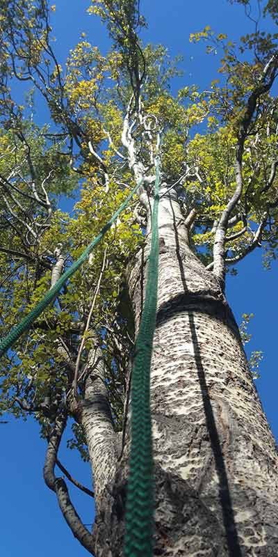 Rope Access - Prairie Woodlands Tree Care LTD.